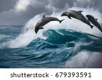 dolphins jumping from ocean...   Shutterstock . vector #679393591