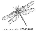 Stock vector black and white dragonfly illustration with a boho pattern vector element for sketching tattoos 679403407