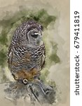 watercolor painting of falconry ... | Shutterstock . vector #679411819