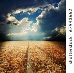 road in field with gold ears of wheat under hole in dramatic sky - stock photo