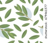 bay leaf seamless vector... | Shutterstock .eps vector #679461577