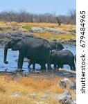 Elephants Covered Of Black Mud...