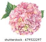 Bouquet Of Pink Hydrangeas...