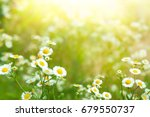beautiful chamomile flowers in... | Shutterstock . vector #679550737