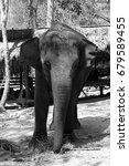 Small photo of elephant calf