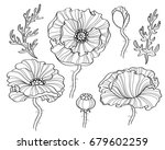 poppy flowers. black and white... | Shutterstock .eps vector #679602259