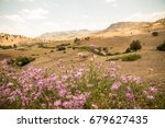 Small photo of Pink amberboa flowers in front of a mountain desert scene in Morroco in spring time