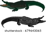 Crocodile Color And Black...