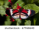 Exotic And Tropical Heliconius...