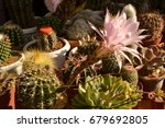 colorful cactus blooming | Shutterstock . vector #679692805