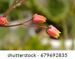 colorful cactus blooming | Shutterstock . vector #679692835