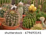 colorful cactus blooming | Shutterstock . vector #679693141