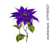 hand drawn wild field flower... | Shutterstock .eps vector #679700527