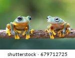 tree frog  java tree frog ...   Shutterstock . vector #679712725