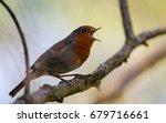 robin red breast  britain's... | Shutterstock . vector #679716661