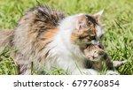 cat with little kitten | Shutterstock . vector #679760854