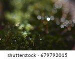 green nature | Shutterstock . vector #679792015