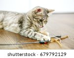 Stock photo beautiful domestic cat playing in the room the concept of pets 679792129