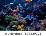 wonderful and beautiful... | Shutterstock . vector #679839121