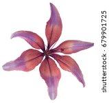 lily pink violet flower.... | Shutterstock . vector #679901725