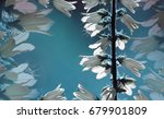 floral background. white... | Shutterstock . vector #679901809