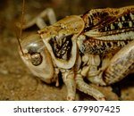 grasshoppers are insects of the ...   Shutterstock . vector #679907425
