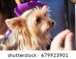 real dog portrait view in close ... | Shutterstock . vector #679923901