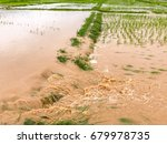 agriculture rice field flooded... | Shutterstock . vector #679978735