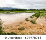 agriculture rice field flooded... | Shutterstock . vector #679978765