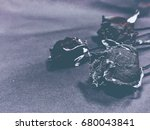 closeup dried rose at the right ... | Shutterstock . vector #680043841