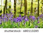 bright bluebells growing on an... | Shutterstock . vector #680113285