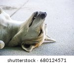 dog lying on the back. | Shutterstock . vector #680124571