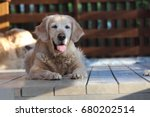 beautiful golden retriver lie... | Shutterstock . vector #680202514