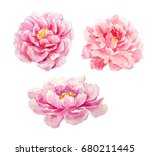 watercolor set of pink peony... | Shutterstock . vector #680211445