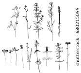 vector set of ink drawing wild... | Shutterstock .eps vector #680215099