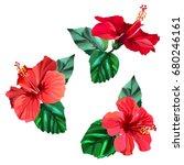 Three Beautiful Red Hibiscus...