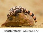 gila monster  heloderma... | Shutterstock . vector #680261677