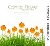 Beautiful Yellow Flower  Cosmo...