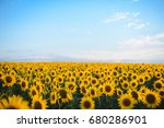 Sunflower Field Landscape....
