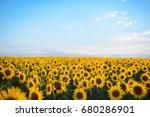 sunflower field landscape.... | Shutterstock . vector #680286901
