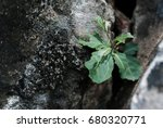 Sapling Growing In The Crevice...