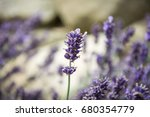 amazing english lavender... | Shutterstock . vector #680354779
