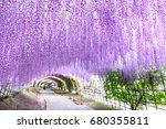 wisteria tunnel at kawachi fuji ... | Shutterstock . vector #680355811