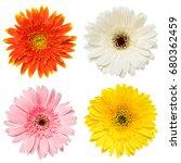 Stock photo set of colorful gerbera flowers isolated on white background 680362459