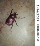 Small photo of Beetle