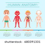 human anatomy medical poster... | Shutterstock .eps vector #680391331