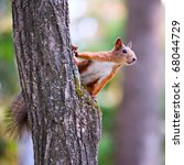 Curious Squirrel In The Autumn...