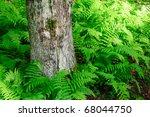 Ferns Around A Tree Trunk