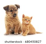 Stock photo puppy and kitten isolated on white background 680450827