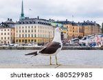 big seagull in front of the...   Shutterstock . vector #680529985